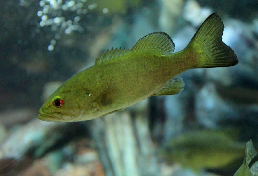 dalhousie-lake-fish
